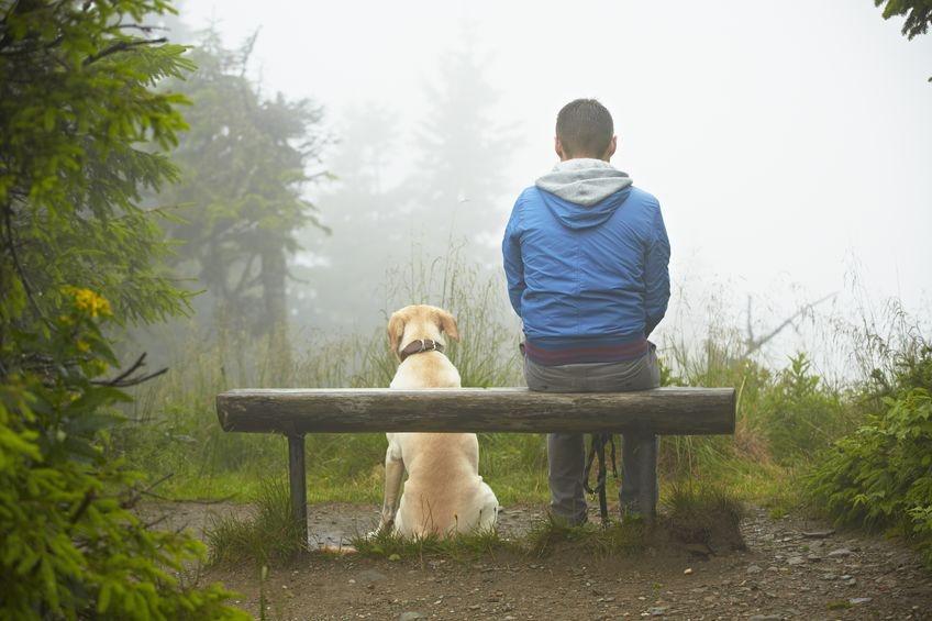Прогулки в лесу спасут от стресса и перенапряжения